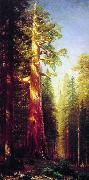 Albert Bierstadt The Great Trees, Mariposa Grove, California oil painting picture wholesale