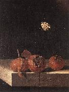 COORTE, Adriaen Three Medlars with a Butterfly zsdgf oil painting