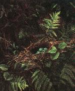 Bird's Nest and Ferns