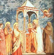 Giotto Scenes from the Life of the Virgin oil painting