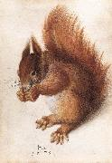 HOFFMANN, Hans Squirrel wf oil painting