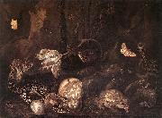 SCHRIECK, Otto Marseus van Still-Life with Insects and Amphibians ar oil painting picture wholesale