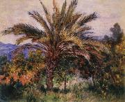 A Palm Tree at Bordighera