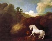 White horse frightened by a lion