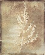 Willim Henry Fox Talbot
