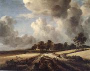 RUISDAEL, Jacob Isaackszon van Wheatfields
