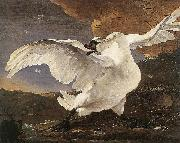 ASSELYN, Jan The Threatened Swan before 1652 oil painting