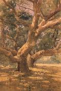 unknow artist Oaks and Shadows oil painting reproduction