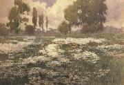 unknow artist Field of Daisies