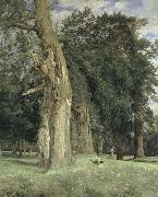 old elms in prater