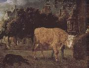 Square cattle