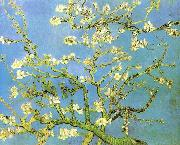 Blossomong Almond Tree