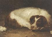 Johann Christoph Rincklake A sporting dog lying down oil painting reproduction