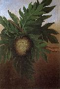 Hawaiian Breadfruit, oil on canvas painting by Persis Goodale Thurston Taylor, c. 1890