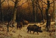Wild Boars in the Snow