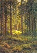 Coniferous Forest, Sunny Day