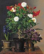 Camelias, amaryllis, hyacinth and violets in ornamental pots on a marble ledge