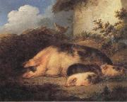 A Sow and Her Piglets