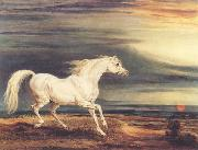 Napoleon's Horse,Marengo at Waterloo
