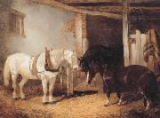 Three Horses in A stable,Feeding From a Manger