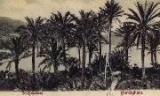 View of Bordighera:the Palms Postcard