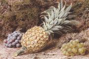 John Sherrin A Pineapple and Grapes on a mossy Bank (mk37) oil painting