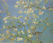 Blossoming Almond Tree (nn04)