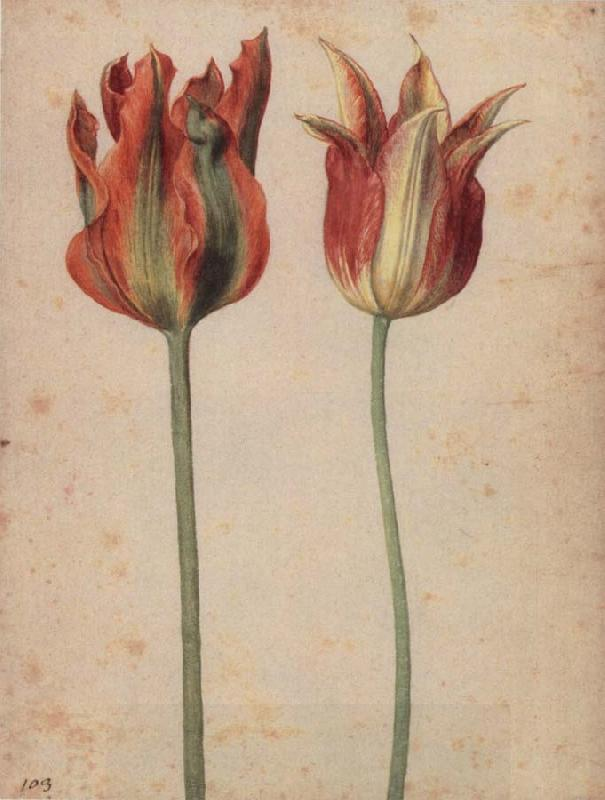 Georg Flegel Two Tulips oil painting picture