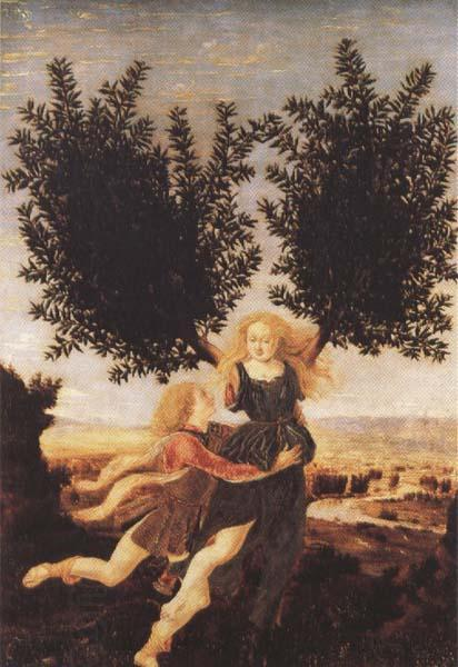 Antonio del Pollaiuolo Apollo and Daphne (mk45) oil painting picture
