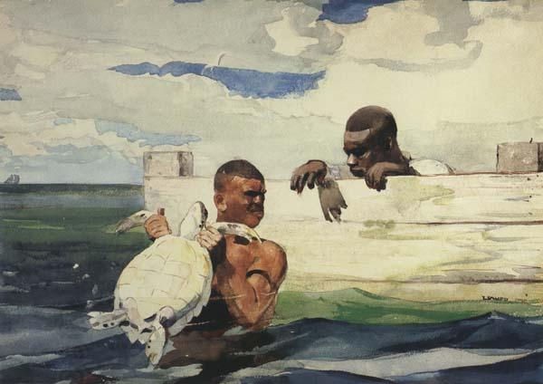 Winslow Homer The Turtle Pound (mk44)
